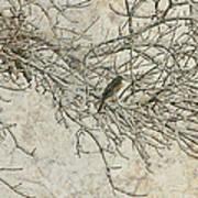 Snowy Bird Poster