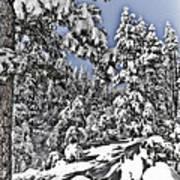 Snowy Dreams  Poster