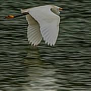 Snowy Egret On Estuary Poster