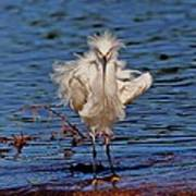 Snowy Egret With Yellow Feet Poster
