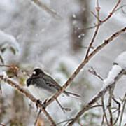 Snowy Grace Cardinals Poster