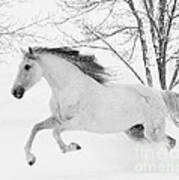 Snowy Mare Leaps Poster
