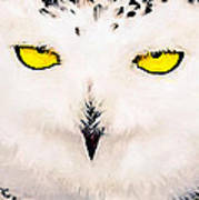 Artic Snowy Owl Painting Poster