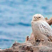 Snowy Owl Resting On Log Poster