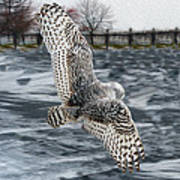 Snowy Owl Wingspan Poster