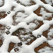 Snowy Path And Paw Prints Poster