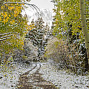 Snowy Road In Fall Poster