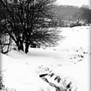 Snowy Stream Poster by Alexandra  Rampolla