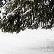 Snowy Tree Branches Poster