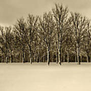 Snowy Tree Line - Sepia Tint Poster