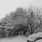 Snowy Trees In Black And White Poster