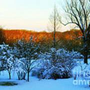 Snowy Trees In December Twilight - Pearl S. Buck Homestead Poster