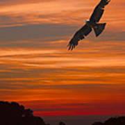 Soaring Bird Of Prey Poster