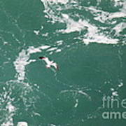 Soaring Over The Falls Waters Too Poster