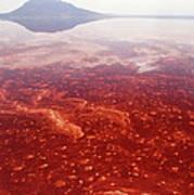 Soda And Algae Formation On Lake Natron Poster