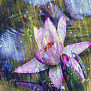 Water Lily Photography Tender Moments  Poster