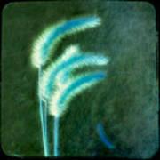 Soft Blue Grass Poster