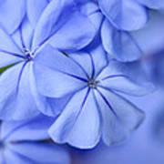Soft Blue Poster