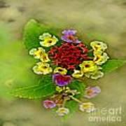 Soft Floral Duvet Cover Poster