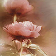 Soft Flower Digital Painting Poster