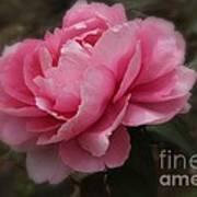 Soft Focus Pink Poster