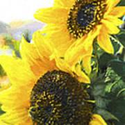 Solar Sunflowers Poster