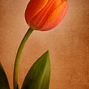 Solitary Tulip Poster