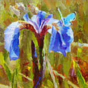Alaskan Wild Iris And Blue Butterfly Flower Painting Poster