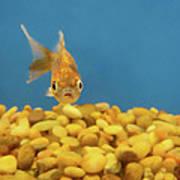 Something Fishy Poster by Donna Blackhall