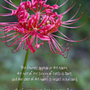 Song Of Solomon - The Flowers Appear Poster