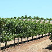 Sonoma Vineyards In The Sonoma California Wine Country 5d24506 Poster