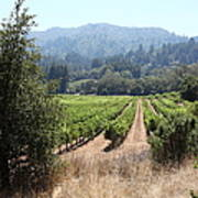 Sonoma Vineyards In The Sonoma California Wine Country 5d24516 Poster