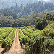 Sonoma Vineyards In The Sonoma California Wine Country 5d24518 Poster