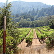 Sonoma Vineyards In The Sonoma California Wine Country 5d24521 Poster