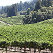 Sonoma Vineyards In The Sonoma California Wine Country 5d24539 Poster