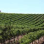 Sonoma Vineyards In The Sonoma California Wine Country 5d24588 Poster