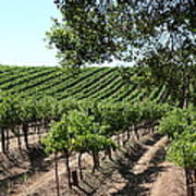 Sonoma Vineyards In The Sonoma California Wine Country 5d24594 Poster