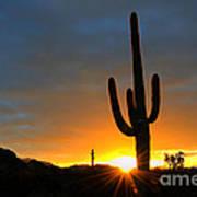 Sonoran Desert Sunrise 4 Poster