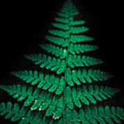 Soothing Fern Poster