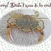 Sorry I Was Crabby Greeting Card - Calico Crab Poster