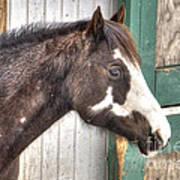 South Barrington Horse Poster