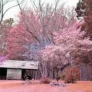 South Carolina Pink Fall Trees Nature Landscape Poster