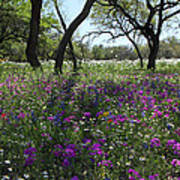 South Texas Meadow Poster