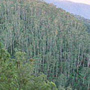 Southeast Forest Ridges Poster