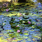 Southern Lily Pond Poster