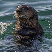 Southern Sea Otter 2 Poster