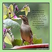 Sparrow Inspiration From The Book Of Luke Poster