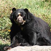 Speckled Bear Poster