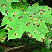 Speckled Leaves Poster