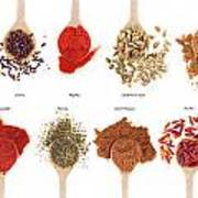 Spices Collection On Spoons Poster
